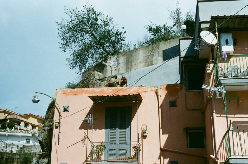 """Ext. Day. Photo taken from below of a bunch of residential buildings in the Rione Sanità, Naples. In the background, there seems to be a villa. In the foreground, on top of one of the low buildings, two brown majestic Mastiffs are """"monitoring"""" the street."""