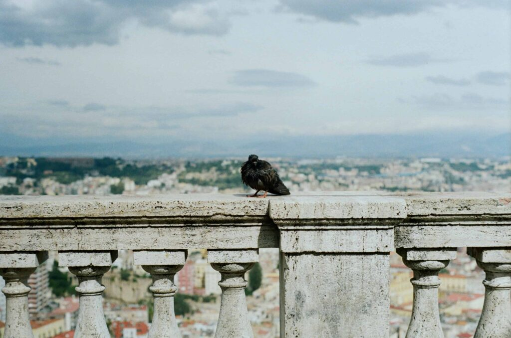 Ext. Day. Photo of Naples from the hill, but it's been taken from behind an old parapet. On top of it, there's a pigeon, their feathers very messy, their general look is rough and sick. They might be on the way of a slow death.